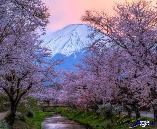 تصاویر زیبای طبیعت
