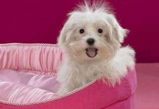 عکس سگ های پشمالو و زیبا
