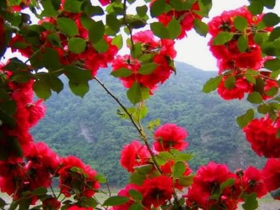 عکس گل در طبیعت برای پروفایل