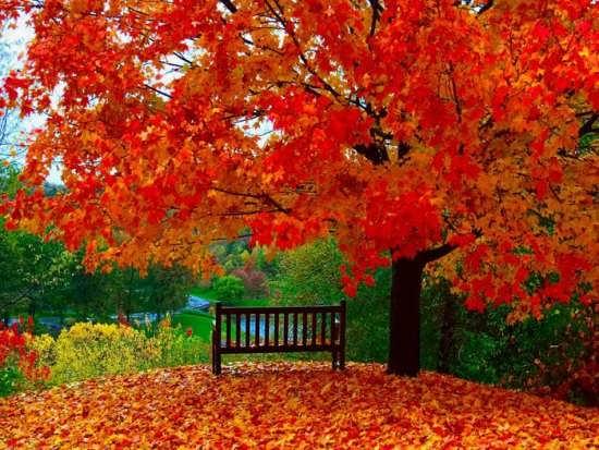 عکس زیبا و جذاب از طبیعت پاییزی