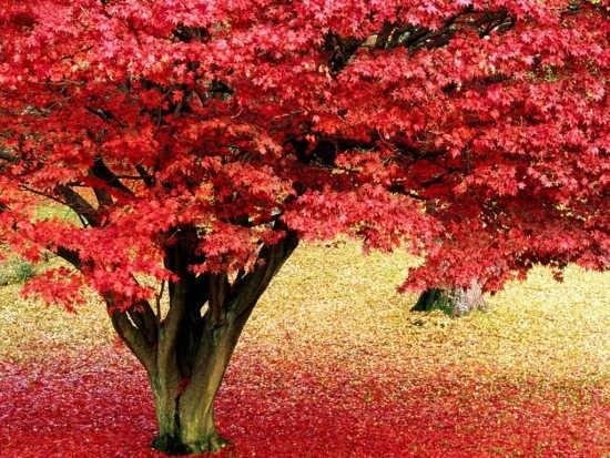 انواع عکس طبیعت زیبای پاییزی
