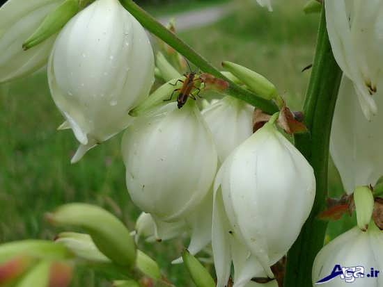 انواع گل های مختلف آپارتمانی
