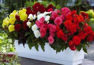 گلهای آپارتمانی بسیار زیبا و جالب
