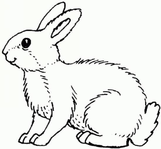 نقاشی خرگوش
