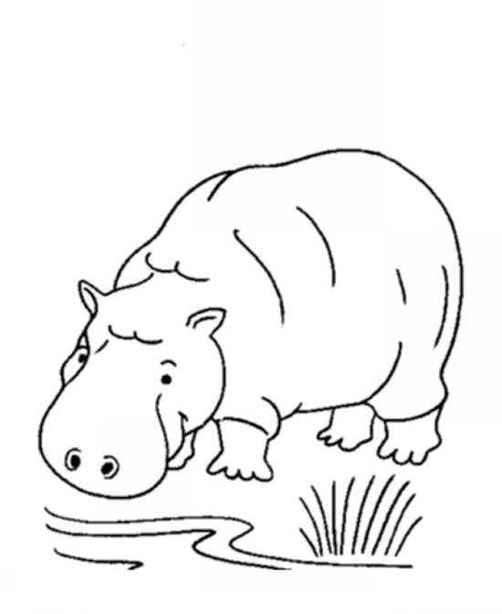 نقاشی انواع حیوانات