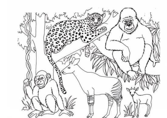 نقاشی ای مختلف حیوانات برای رنگ آمیزی کردن بچه ها
