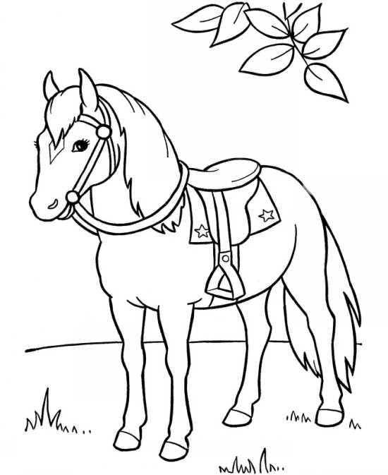 نقاشی اسب برای رنگ آمیزی کودکان