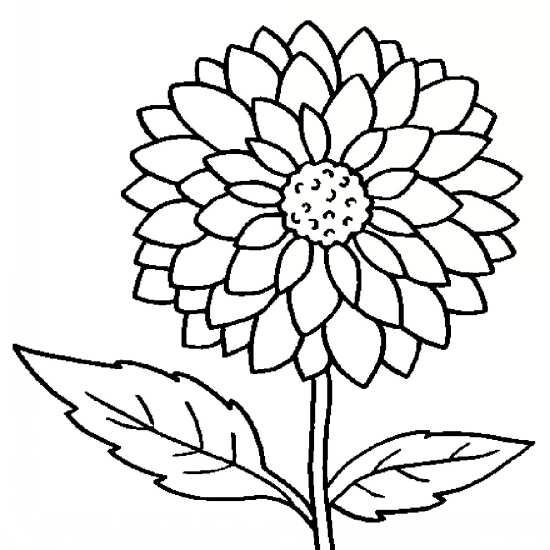 نقاشی های زیبا و جدید از انواع گل ها