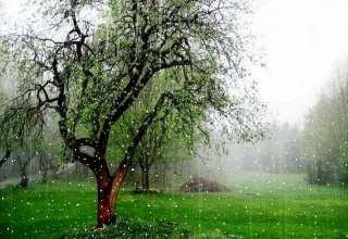 عکس طبیعت بارانی زیبا