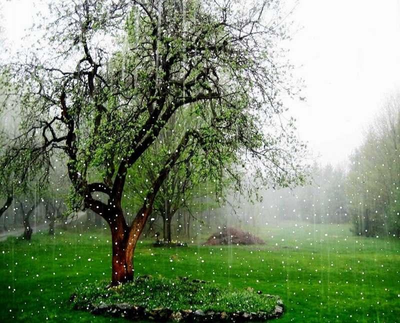 عکس کیک ماشین عکس های طبیعت بارانی بسیار زیبا و با طراوت