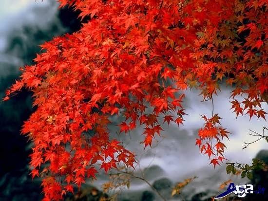 عکس های درختان پاییزی