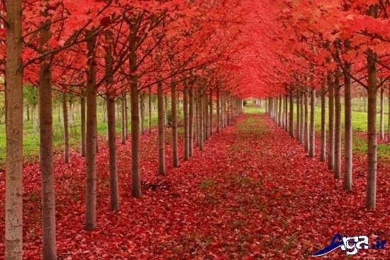 عکس مناظر پاییزی زیبا و جذاب