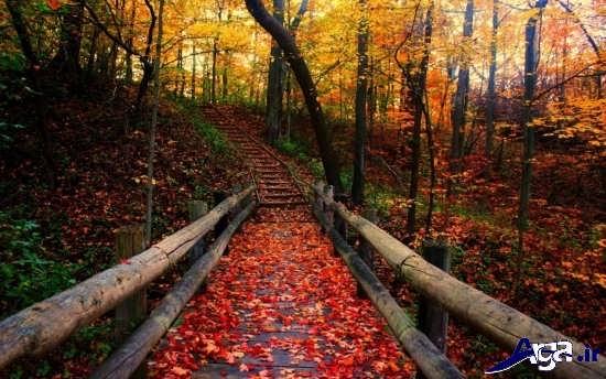تصاویر زیبا و رمانتیک پاییزی