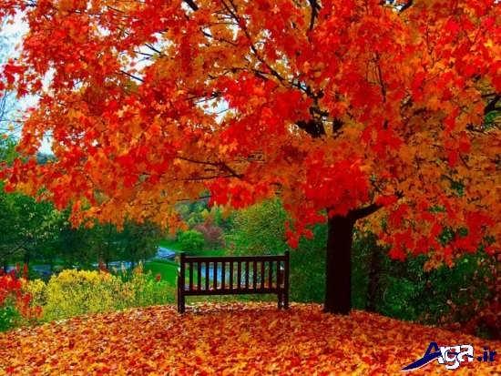 مجموعه عکس مناظر پاییزی بسیار زیبا