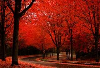 عکس های زیبای مناظر پاییزی