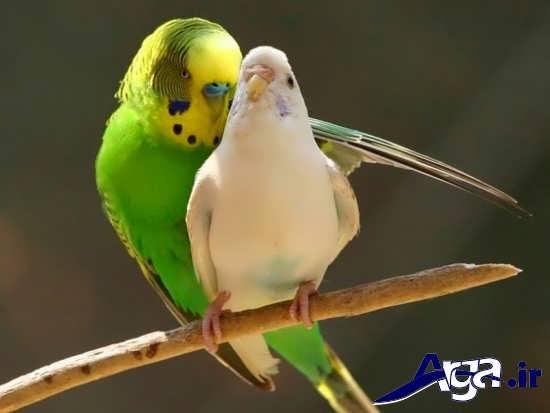 عکس پرنده های زیبا و جذاب