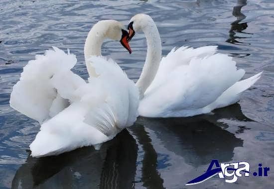 گالری انواع تصاویر پرنده های زیبا و جذاب