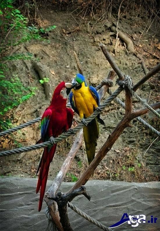 تصاویر پرندگان عاشق و زیبا