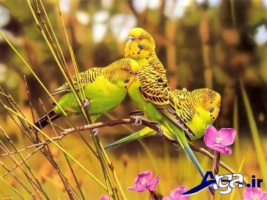 عکس پرنده های زیبا و عاشق