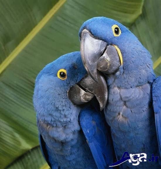 تصاویر زیبا و جذاب از پرندگان در طبیعت