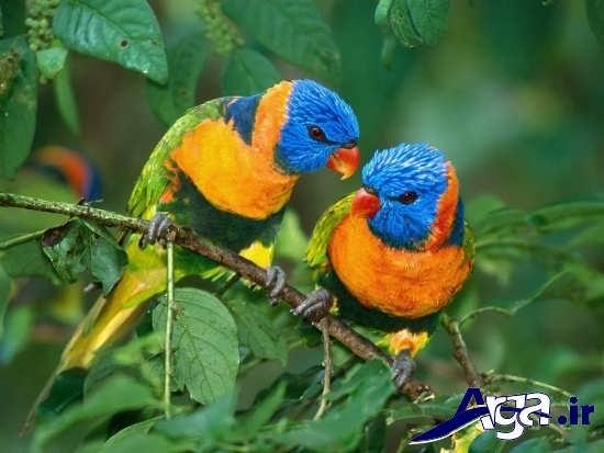 انواع عکس پرنده های عاشق و زیبا