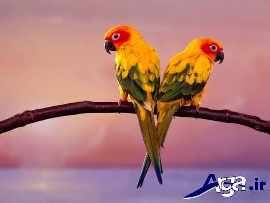 تصاویر زیبای پرندگان در طبیعت