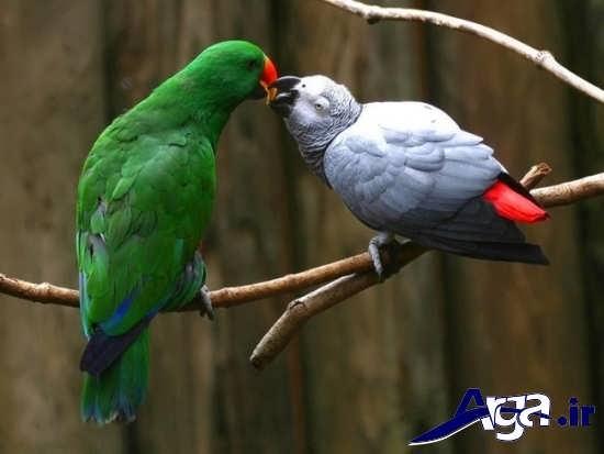 انواع عکس های زیبا و جذاب پرندگان