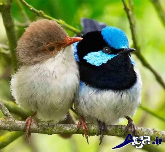 تصاویر پرنده های زیبا و عاشق