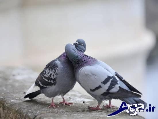 عکس های پرندگان زیبا و جذاب