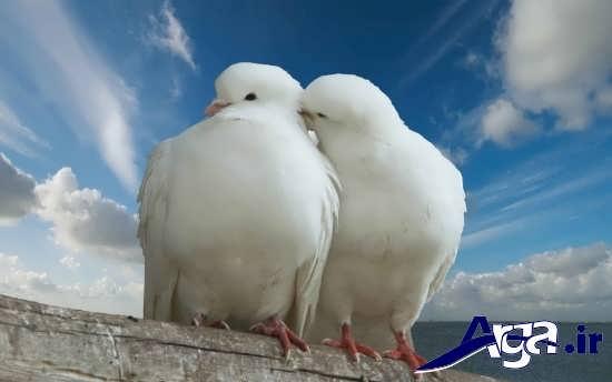مجموعه عکس های زیبا و جذاب پرندگان