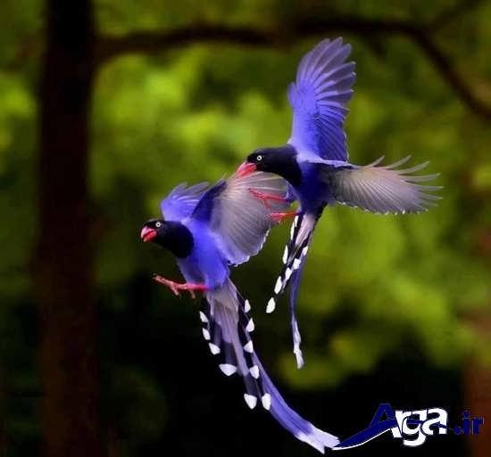 تصاویر پرنده های زیبا و جذاب
