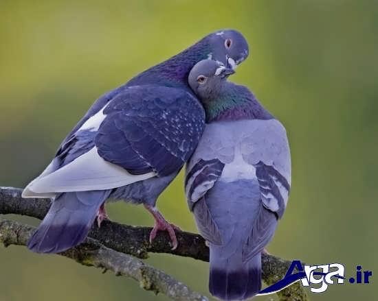 عکس های پرنده های زیبا و جذاب