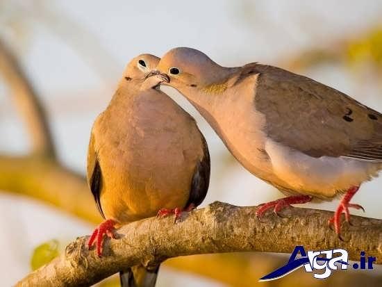 عکس پرنده های عاشق و زیبا
