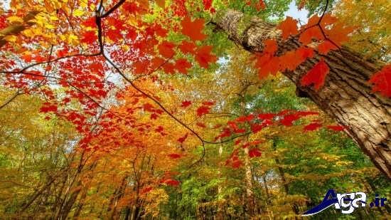 عکس های عاشقانه پاییزی زیبا