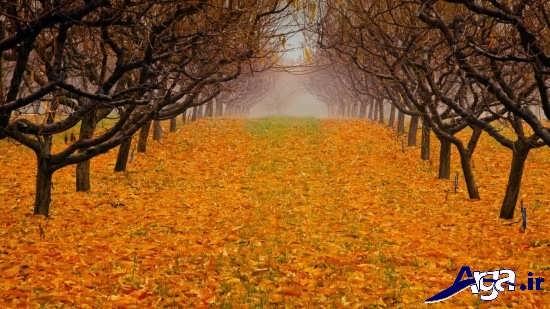 عکس های زیبای پاییزی