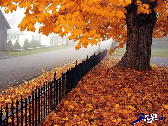 انواع عکس های زیبا و جذاب پاییزی