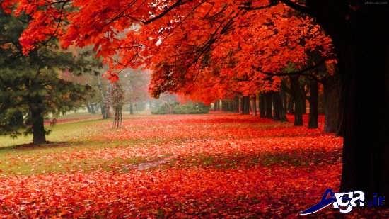 انواع عکس های پاییزی عاشقانه