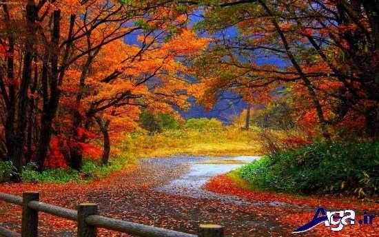 انواع عکس های زیبای پاییزی عاشقانه
