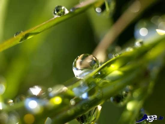 عکس زیبا از طبیعت بارانی