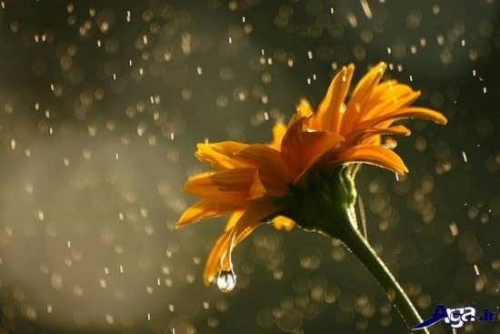 عکس های زیبای لحظات بارانی