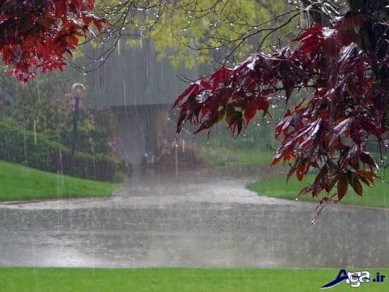 عکس های زیبای طبیعت بارانی