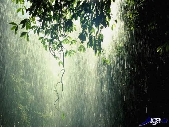 تصاویر زیبا و جذاب باران در طبیعت
