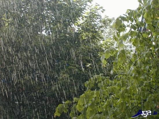 عکس های طبیعت بارانی بسیار زیبا و جذاب