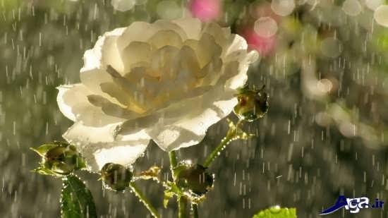 عکس های زیبا و جذاب از باران