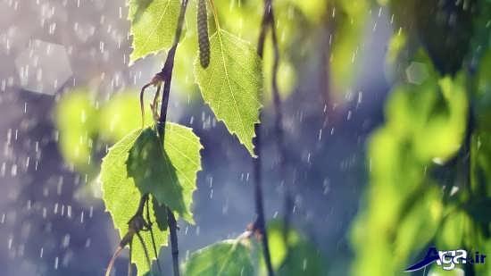انواع عکس های زیبا و جذاب از باران