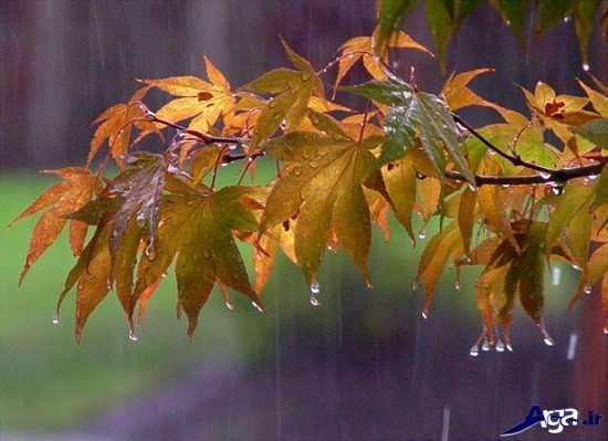 زیباترین تصاویر بارانی