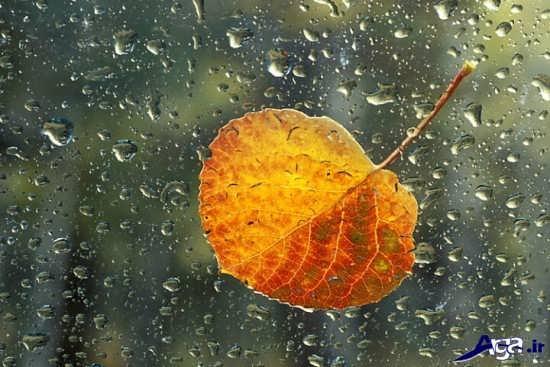 عکس های طبیعت بارانی بسیار زیبا
