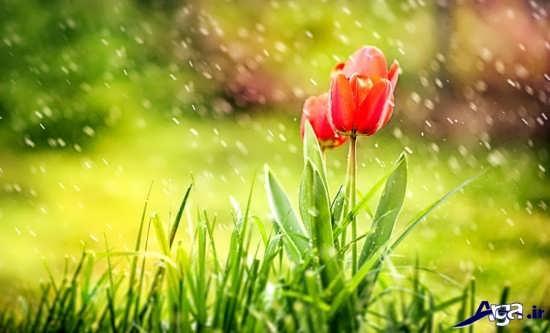 انواع عکس های بارانی زیبا