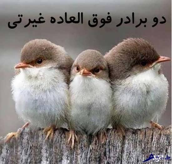 جذاب ترین عکس نوشته های طنز