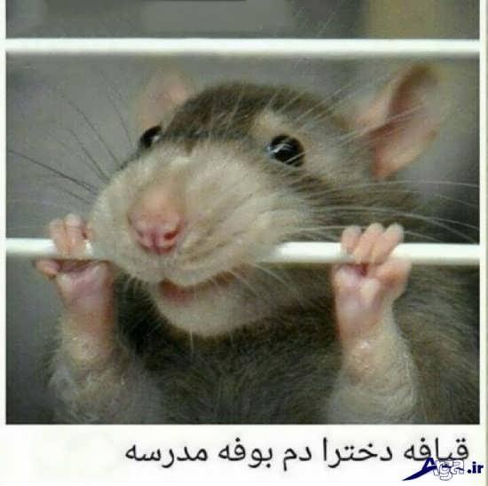 تصاویر نوشته دار خنده دار و جالب